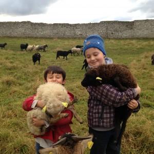 mouton-enfants-eco-paturage